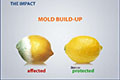 reduces mold build-up on lemons